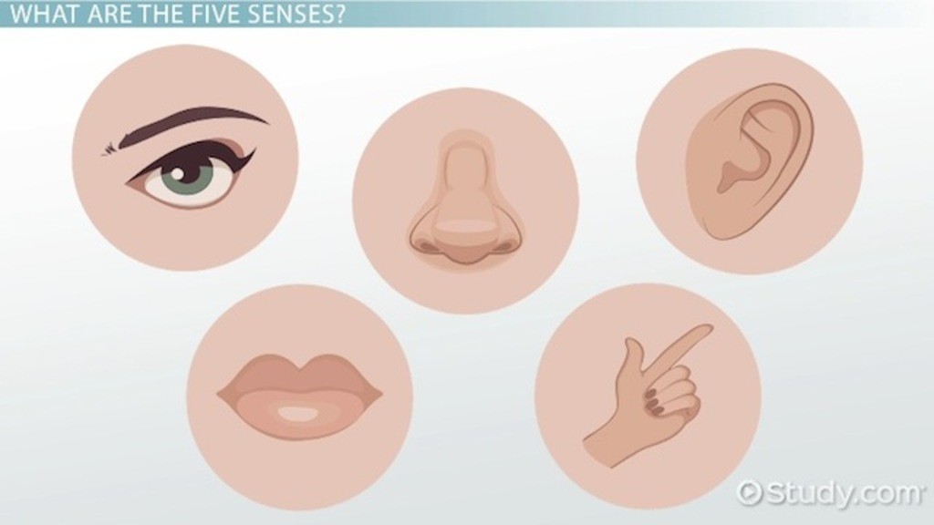 The Five Senses & Their Functions Video & Lesson