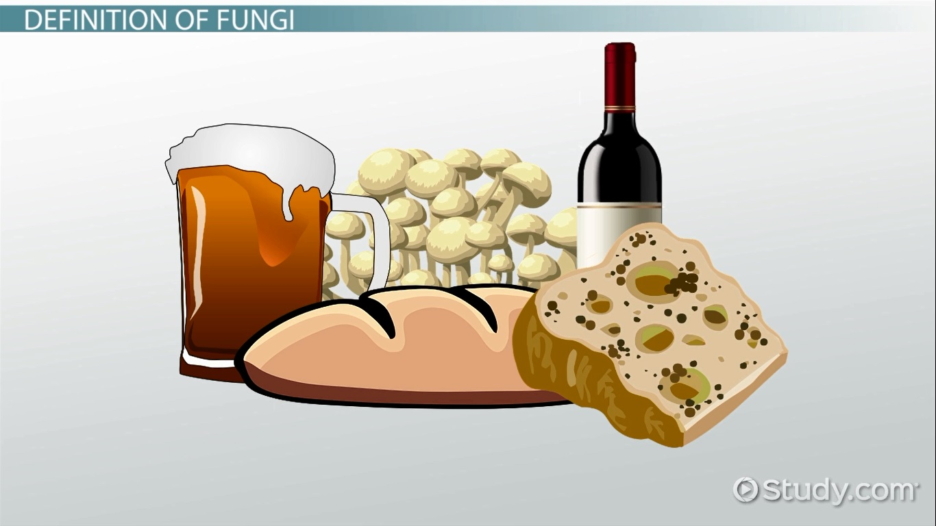 Kingdom Fungi Definition Characteristics Amp Examples