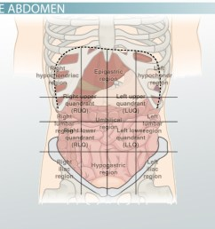 the 4 abdominal quadrants regions organs [ 1280 x 720 Pixel ]