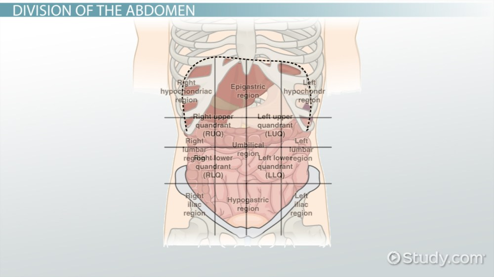 medium resolution of the 4 abdominal quadrants regions organs