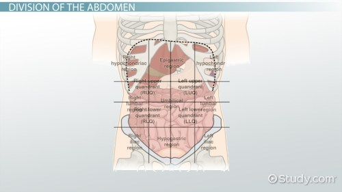 small resolution of the 4 abdominal quadrants regions organs