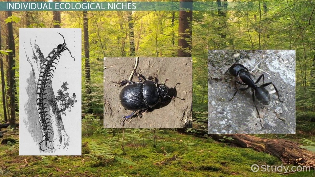 Ecological Niche Definition & Importance Video & Lesson