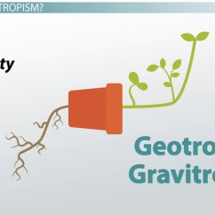 What Is A Tree Diagram In Math 91 Honda Crx Radio Wiring Geotropism: Definition, Examples & Experiments - Video Lesson Transcript   Study.com