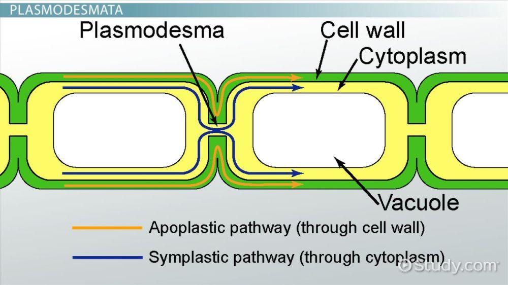 medium resolution of animal cell diagram campbell