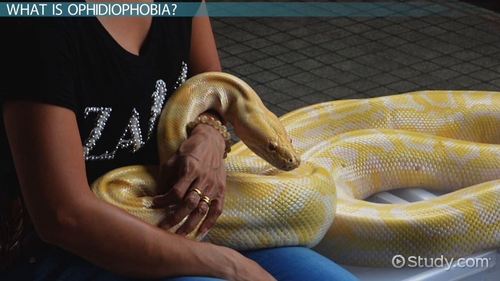 Ophidiophobia Definition Facts  Treatment  Video