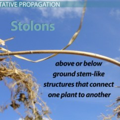 Diagram Of Plant Parts Worksheet 6 Pin To 7 Trailer Wiring Vegetative Propagation In Plants: Definition, Methods & Examples - Video Lesson Transcript ...