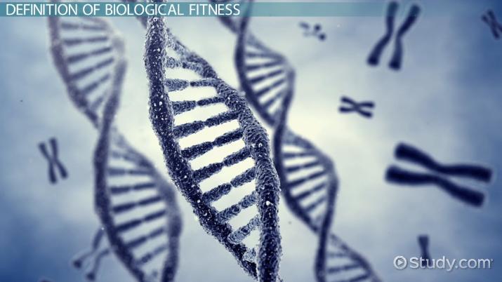 Biological Fitness Definition