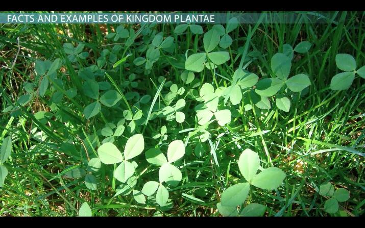 Kingdom Plantae Facts Characteristics Amp Examples Video