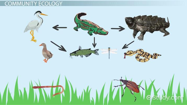 What Is Ecology? Definition & Explanation Video