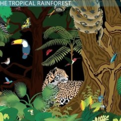 Tropical Rainforest Food Web Diagram Fluorescent Ballast Wiring The Video Lesson Transcript Study Com
