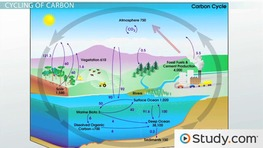 labelled diagram of water cycle 1998 honda civic stereo wiring the precipitation condensation and evaporation cycles matter nitrogen carbon