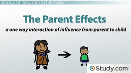 The Family Life Cycle Definition Stages & Theory Video & Lesson