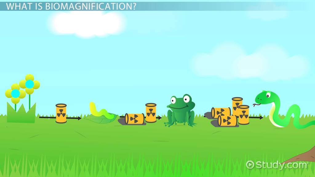What Is Biomagnification? Definition & Examples Video