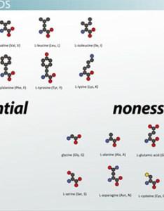 What are amino acids definition  structure video lesson transcript study also rh