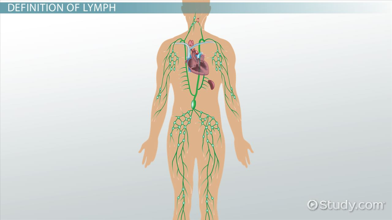 hight resolution of what is a lymph definition anatomy