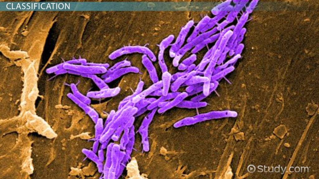 How Are Bacteria Classified? Video & Lesson Transcript