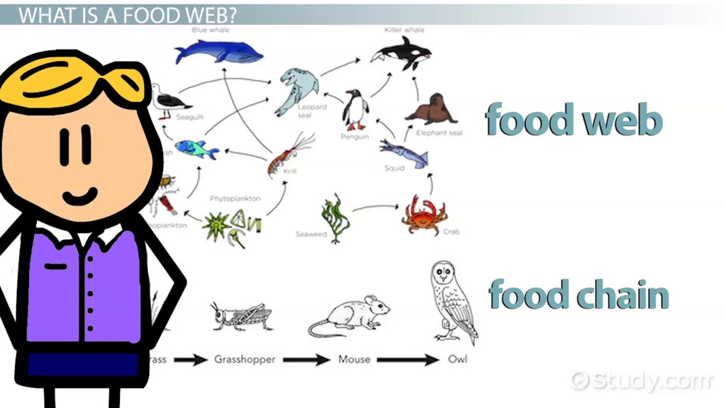 sea turtle life cycle diagram 2007 international 4300 starter wiring the food web of arctic ocean - video & lesson transcript | study.com