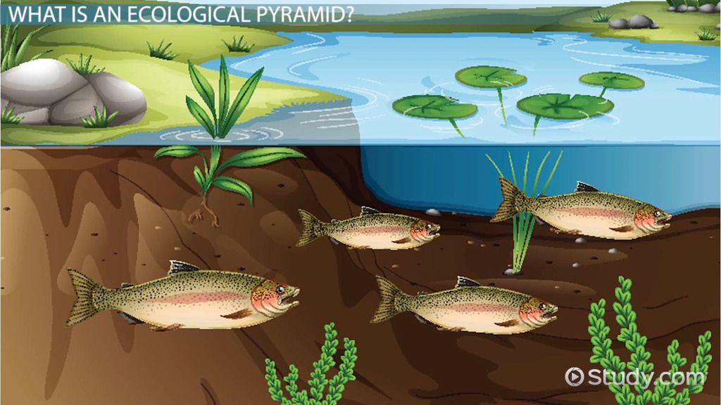 Three Types Of Ecological Pyramids Number Biomass