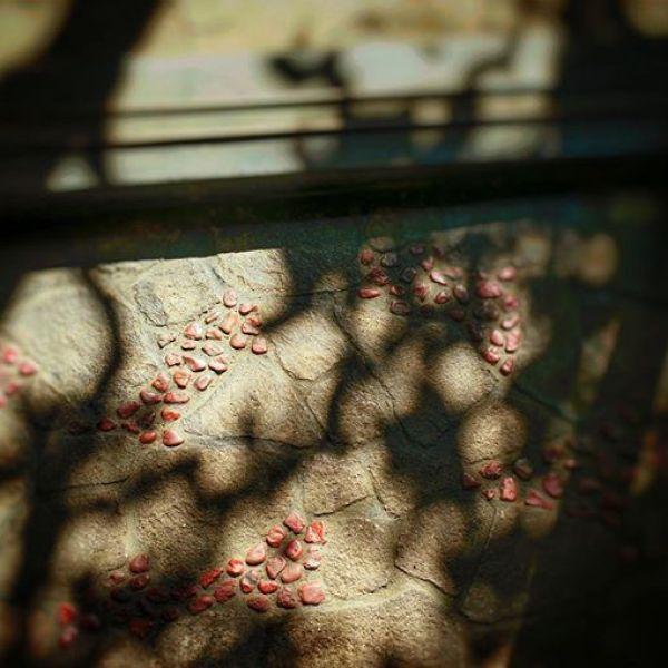 秋空と珈琲と隅田川からの気持ち#sonya7 #tokyo #snapseed#タバスコ光画