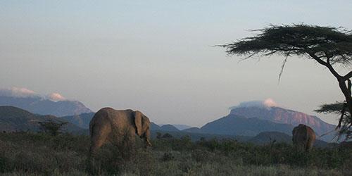 Elephants and Mount Kenya