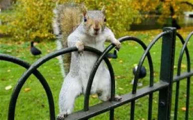My Anti-Spirit Animal: The Campus Squirrel