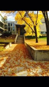 Binghamton Univeristy Campus; Vestal, New York