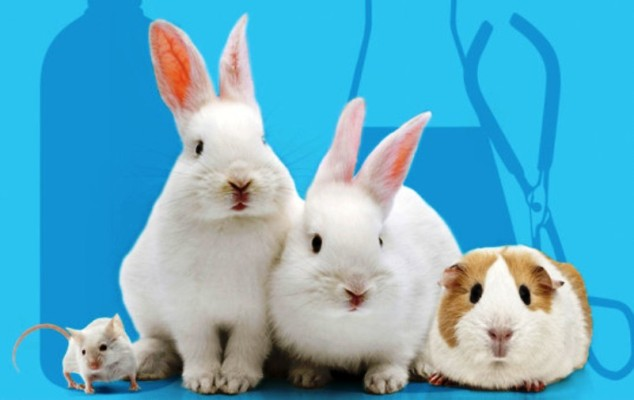Cruelty Free Beauty: Finally, a Movement You and Your Hamster Can Both Agree On
