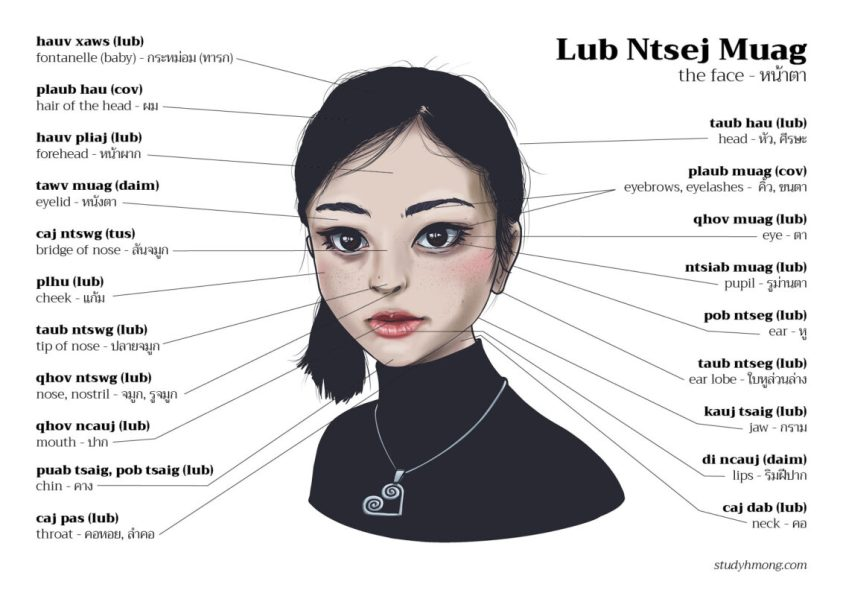 Anatomy - The Face | Study Hmong