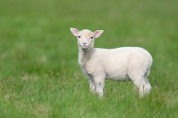 Lamb of God in the New Testament  Mentioned 29 Times ...