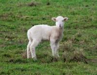 Lamb of God | Three Great Things