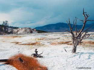 The Upper Terraces at Mammoth Hot Springs, Yellowstone National Park. Copyright Cornelia Kaufmann