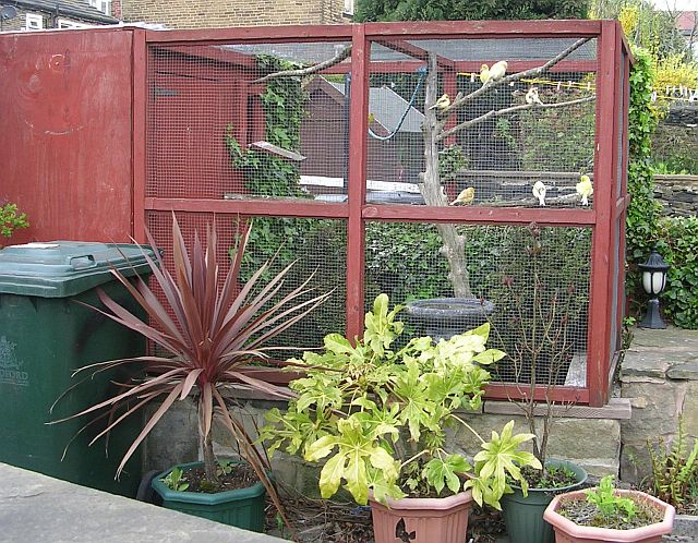 Stuff4petz Building An Outdoor Bird Aviary What You