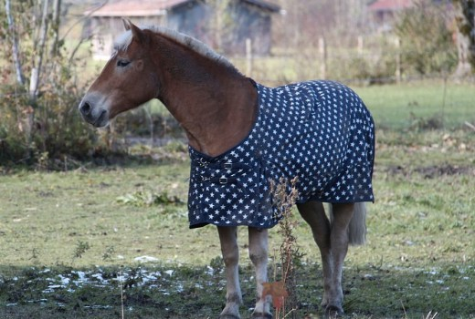 How to fit a pony rug correctly