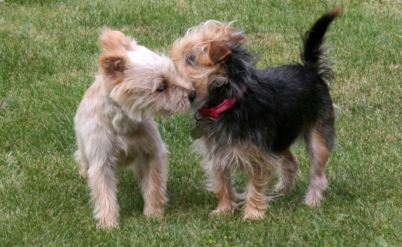 Observe dog etiquitte when conducting dog on dog introductions