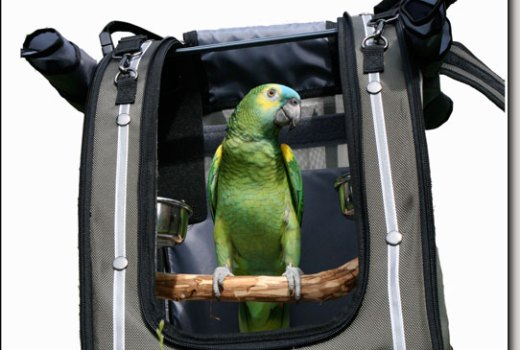 Pac-o-bird backpack bird carriers