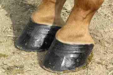 Understanding Equine Hoof Care is essential for a healthy hoof