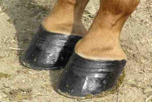 Understanding Equine Hoof Care is essential for a healthy hoof