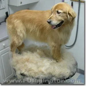 Furminator Deshedding Treatment