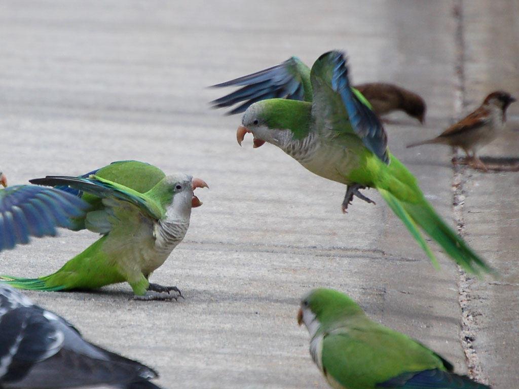 Bird Behavior: The Social Lives of Birds