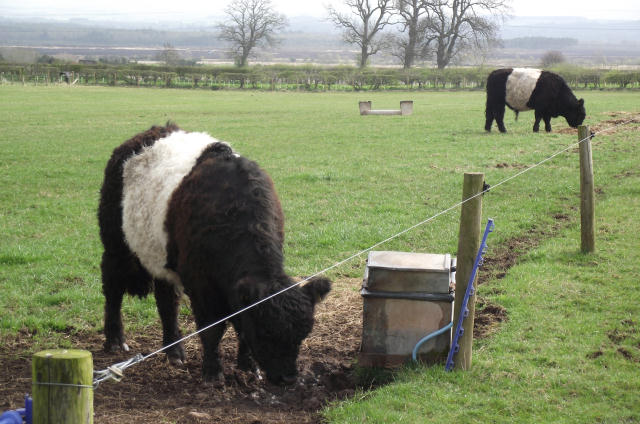 Wire Fence Posts Further Electric Fence Installation Furthermore Home
