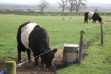 Types of electric fence wire