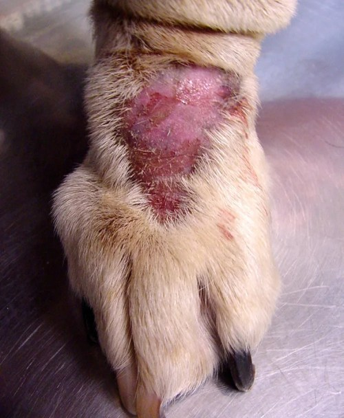 How to cure dog hot spots