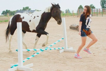 Natural horsemanship training liberty