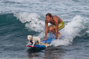 Traveling with your dog to the beach