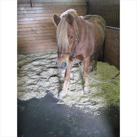 Rubber Horse Stall Mats