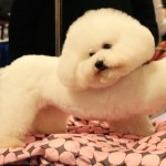 Dog grooming tips: Brushing & Combing a Dog