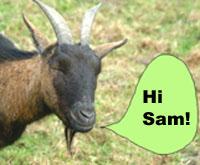 Goat saying Hi Sam!