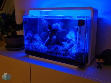 Mondlicht im Superfish Home