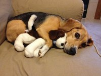 How to stop your dog from cheweing your stuffed animals ...