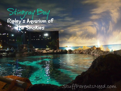 ripley's aquarium of the smokies 2